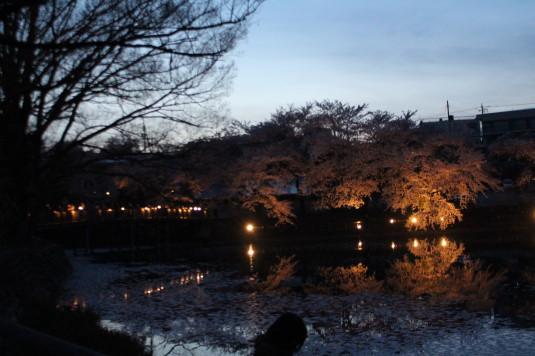 長坂夜桜祭り 長坂湖