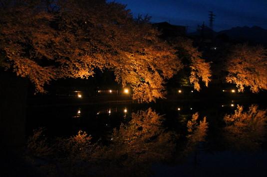 長坂夜桜祭り 夜桜 夕暮れ