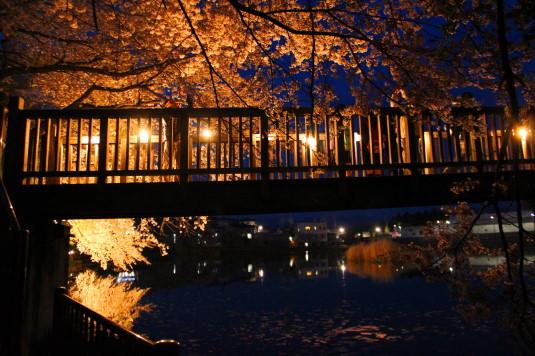 長坂夜桜祭り 夜桜 橋の下