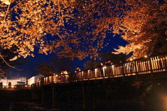 長坂夜桜祭り 夜桜 橋の上