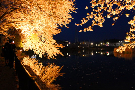 長坂夜桜祭り 夜桜 散策路