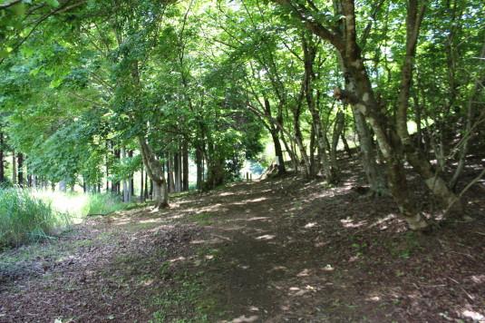 久保の吊り橋 森林浴