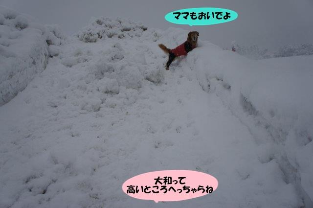 DSC03927.jpg