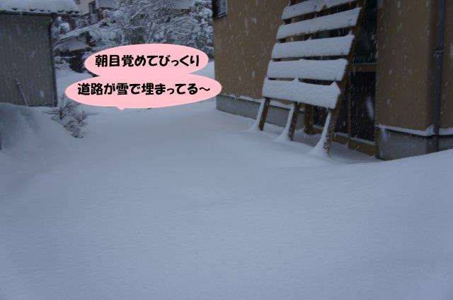 DSC04308.jpg