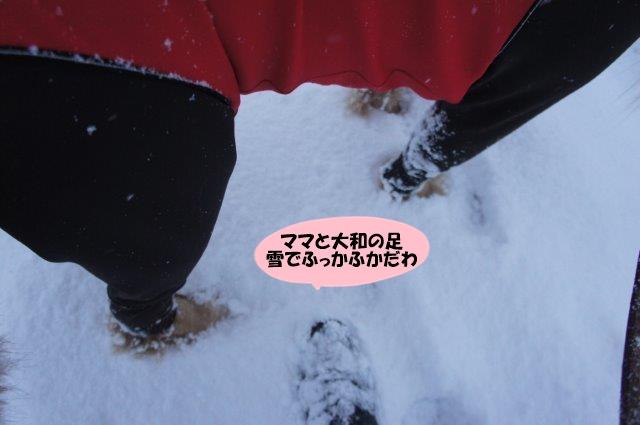 DSC04349.jpg