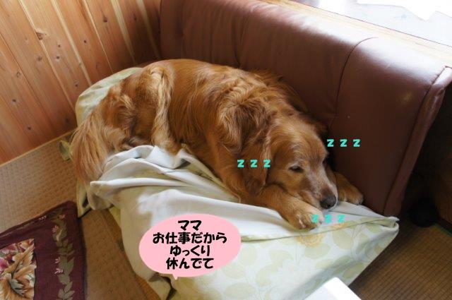 DSC04711.jpg