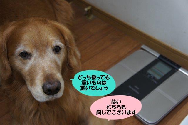 DSC04713.jpg
