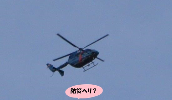 DSC05157.jpg