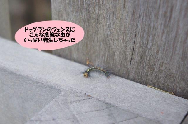 DSC05866.jpg