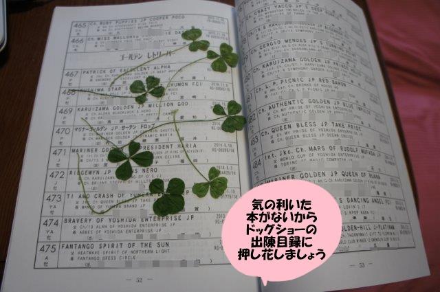 DSC06704.jpg