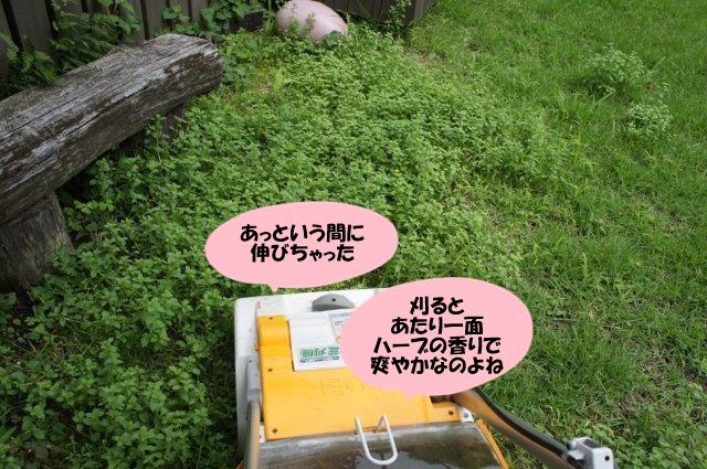 DSC06732.jpg