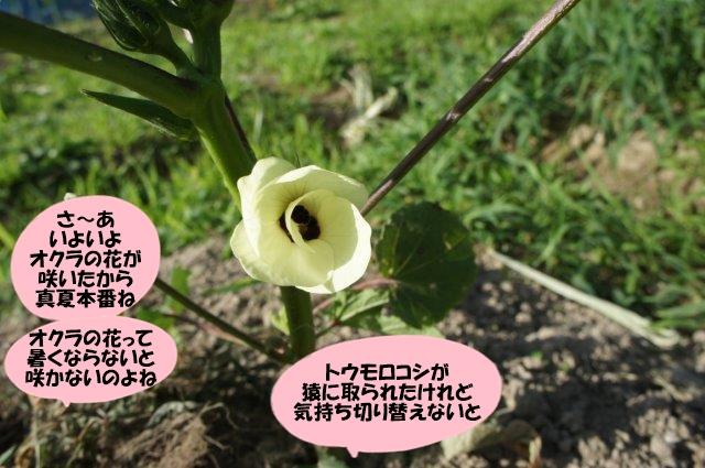 DSC06869.jpg