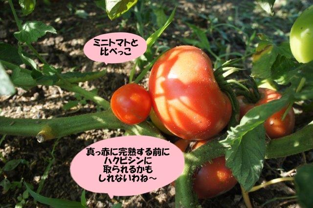 DSC06924.jpg