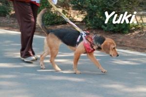 ユキ (154)