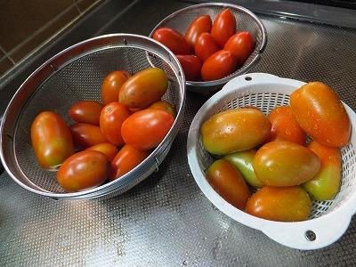 トマト合計