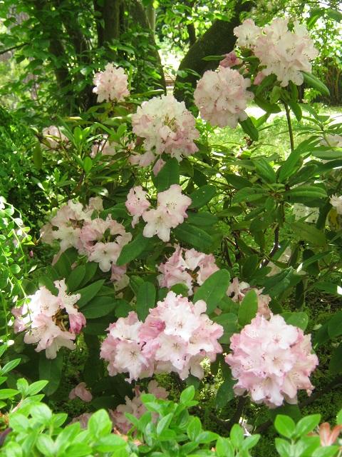 koishikawa150504-124.jpg