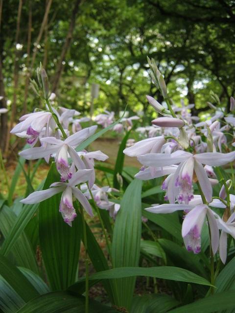 koishikawa150504-139.jpg