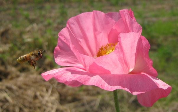 poppy150517-110.jpg