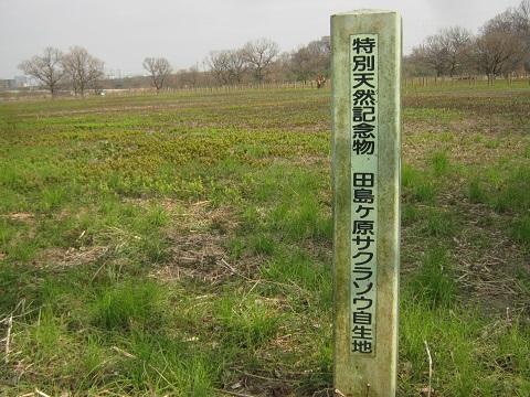 sakurasou150315-110.jpg