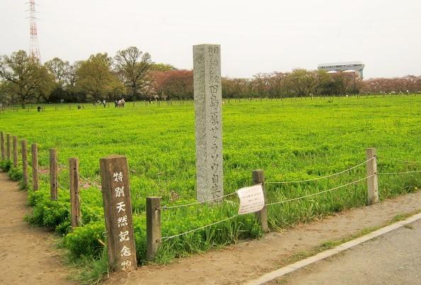 sakurasou150412-105.jpg