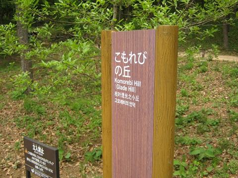 shouwa150429-114.jpg