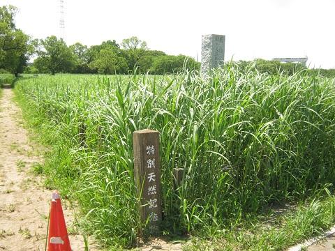 tazimagahara150517-102.jpg