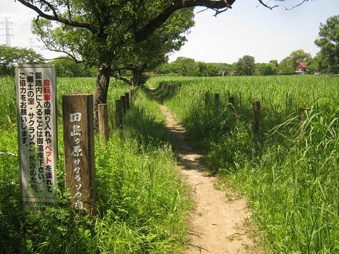 tazimagahara150517-108.jpg