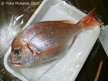 © 陽佳 2010「祝鯛」資料写真H000071.jpg