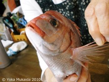 © 陽佳 2010「祝鯛」資料写真DH000086.jpg