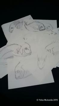 「祝鯛」スケッチ画1420111592374.jpg