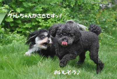 DSC_2443.jpg