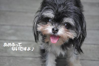 DSC_2788.jpg
