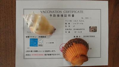 ワクチン接種7