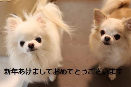 IMG_5549.jpg