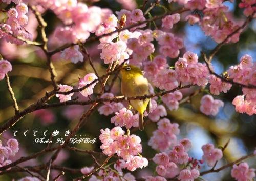 5三嶋神社15.03.11