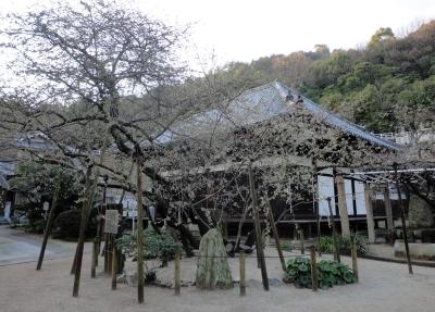 3うば桜15.03.19