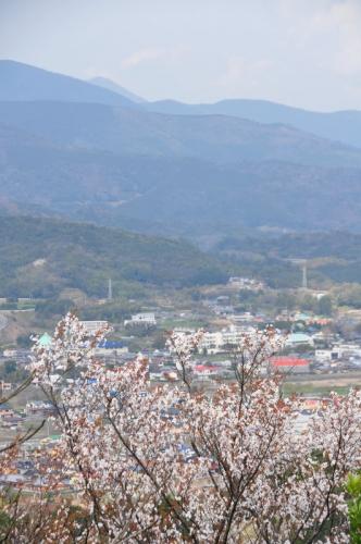 6ヤマザクラ 篠山15.03.21