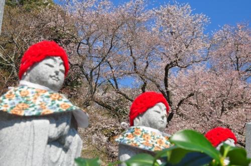 8金龍桜15.03.27