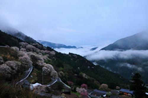 1桜地区15.04.04