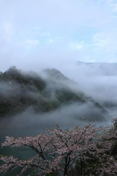 4仁淀川町桜15.04.04