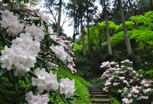 1丸山公園20150410