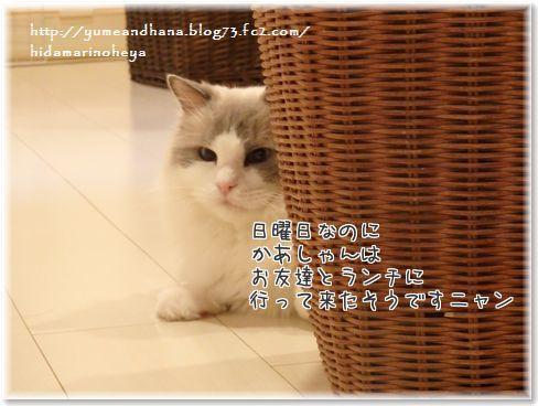 001-5TS_knSOA2vOvRm1437311776_1437311900.jpg