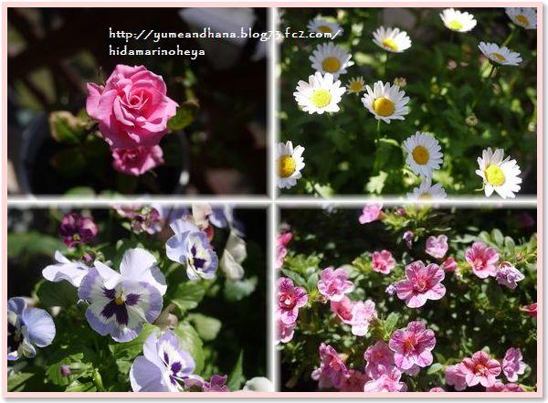 000-01-ベランダの花15072