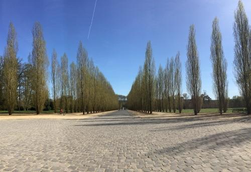 ベルサイユ並木