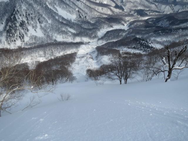 2月11日 ボトムの林が切り取られてる