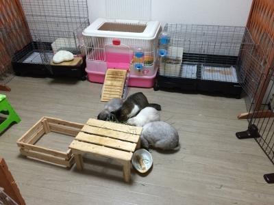 チモシー(牧草)をウサギと一緒に食べる猫