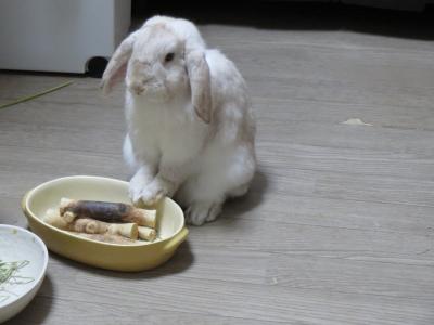 行儀の良いウサギ