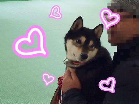 new_20141228gohanchan-3.jpg