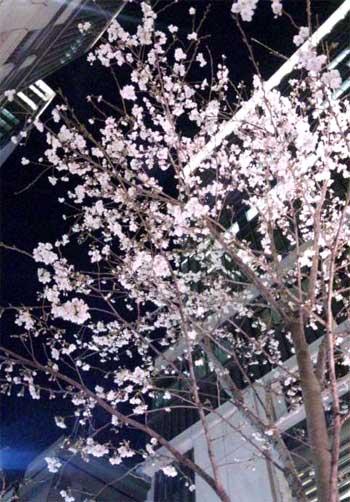 20150327_mituisumitomo_003.jpg
