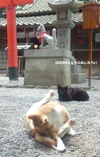 20150523_oomiwa_017.jpg